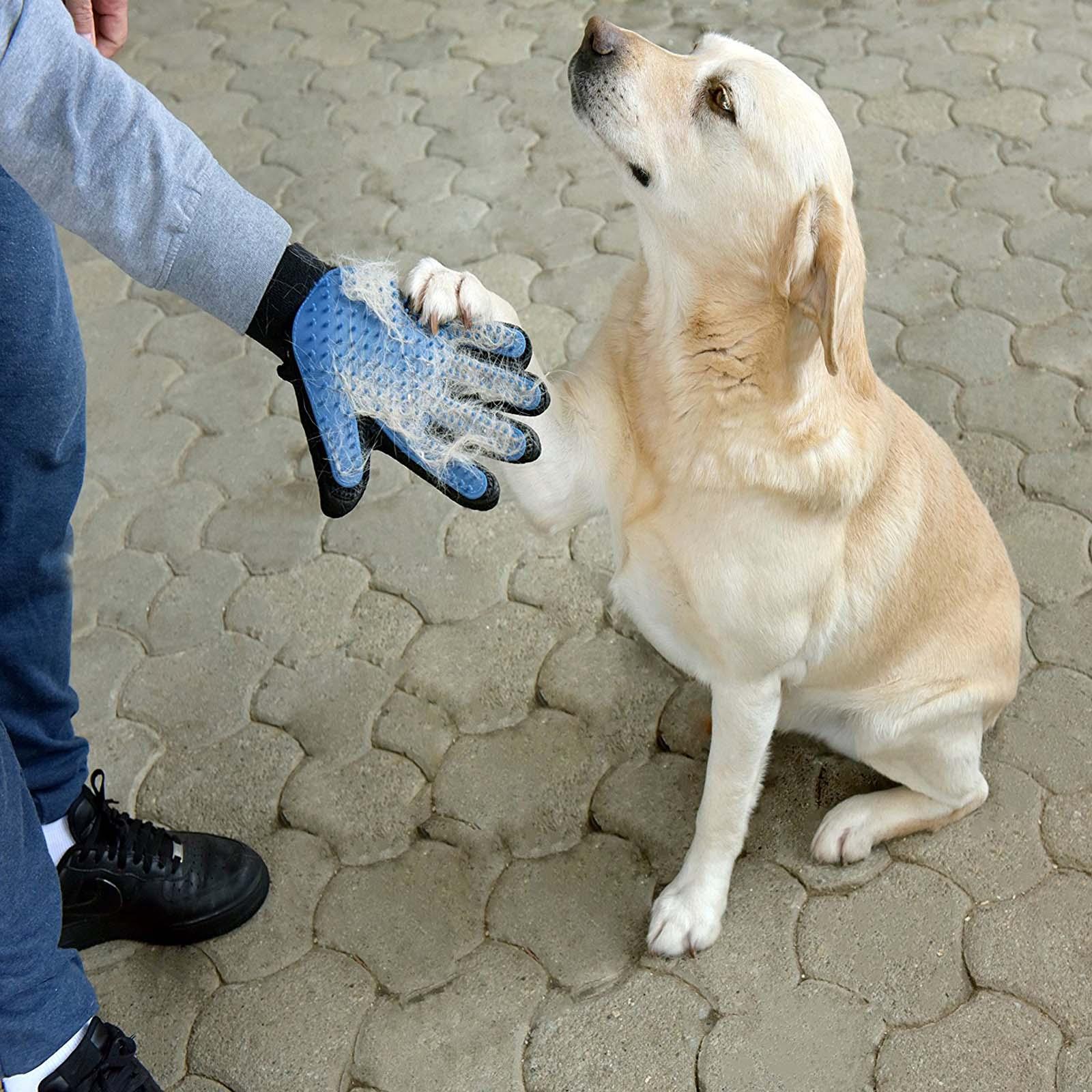 Softest Premium Deshedding Glove For Gentle Amp Efficient